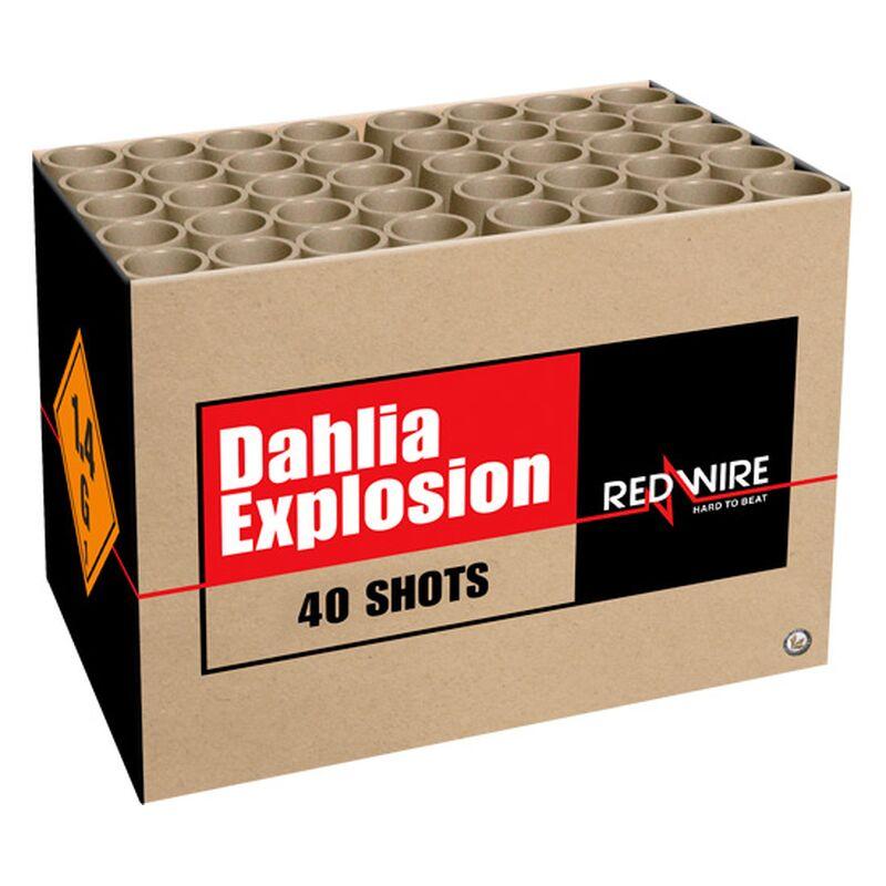 Dahlia Explosion 40-Schuss-Blitzknall-Batterie (Stahlkäfig) Laute Schläge und prächtig gefärbte Dahlien! Ein Erinnerungswürdiger 30mm-Verbund von 40 Schüssen.